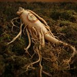 Ginseng is rich in active compounds that fights fatigue.